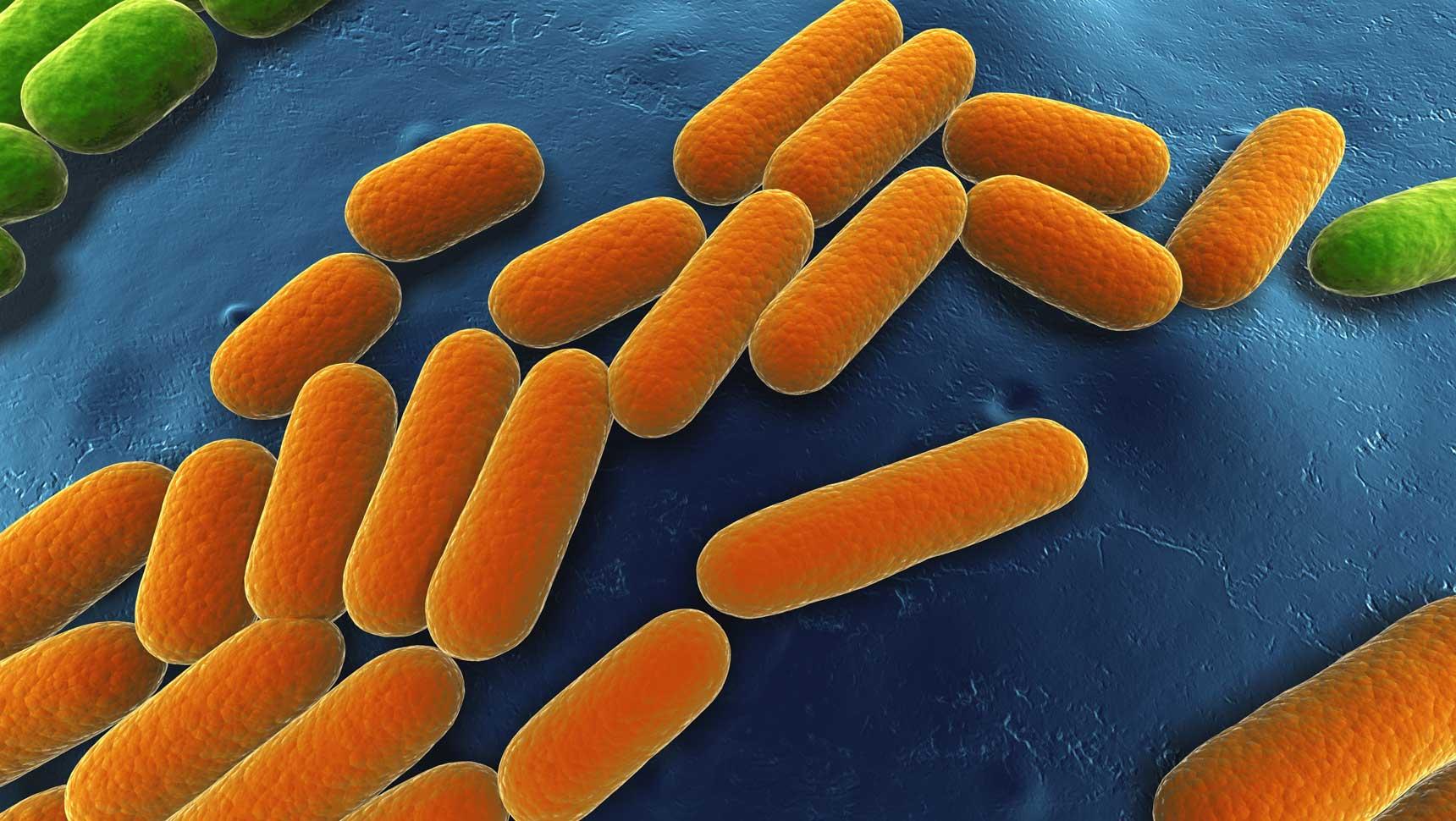 Expertise: Microbial Fermentation | Alltech
