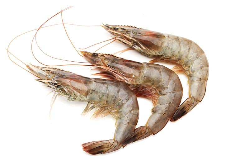 close-up photo of shrimp