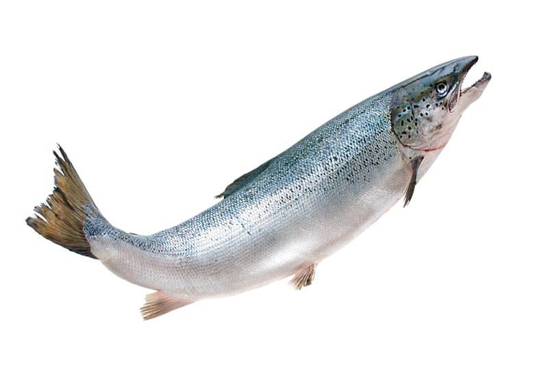 close-up photo of salmon