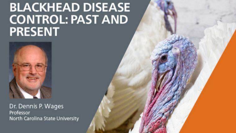 Blackhead disease in chickens and turkeys