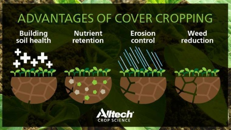 Incorporate cover crops for plant and soil health