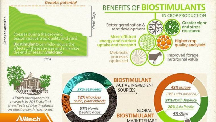 Athlete-style nutrition for a plant: The science of biostimulants
