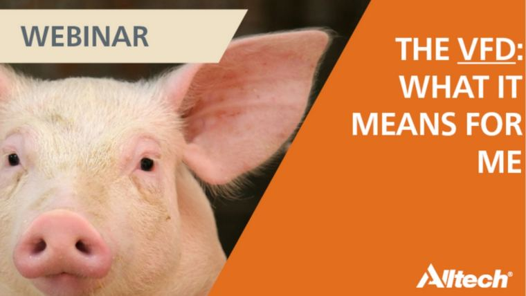 Pig producers & the U.S. Veterinary Feed Directive