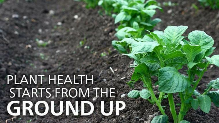 Plant health starts underground with healthy soil