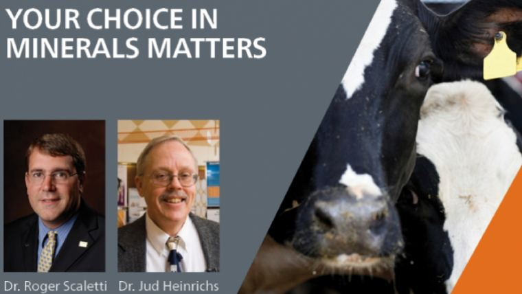 Will inorganic minerals meet the needs of your dairy cow?