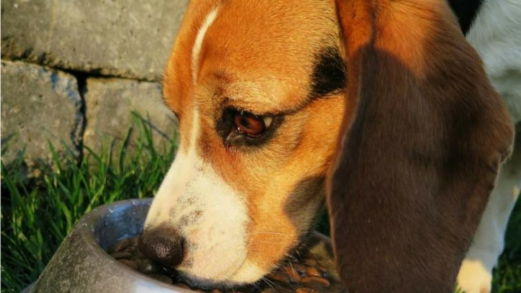 Sniffing out the source: Pet food traceability
