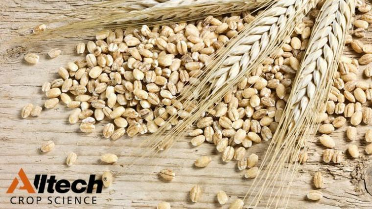 Wheat research shows the benefits of amino acid technology