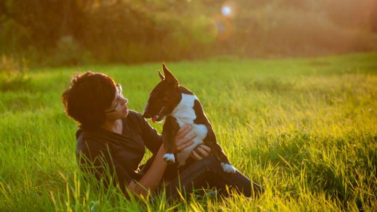 Como escolher o alimento ideal para o seu pet?