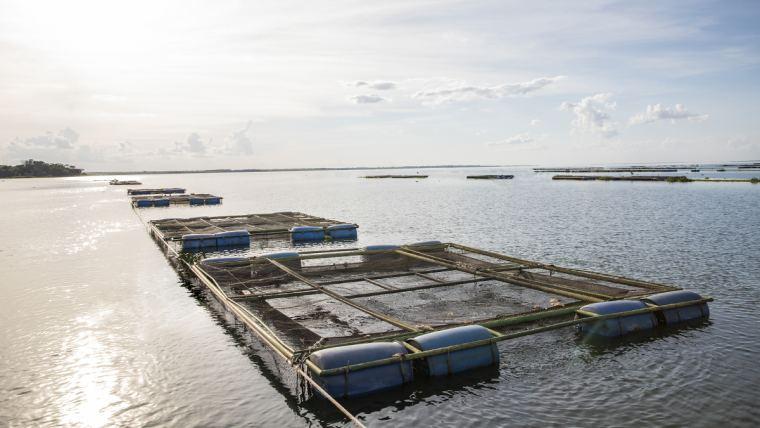 Campanha online orienta profissionais do setor de aquacultura