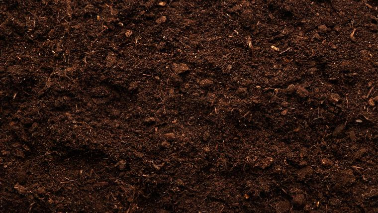 Estímulo de microrganismos no solo contribui para melhor desenvolvimento dos cultivos