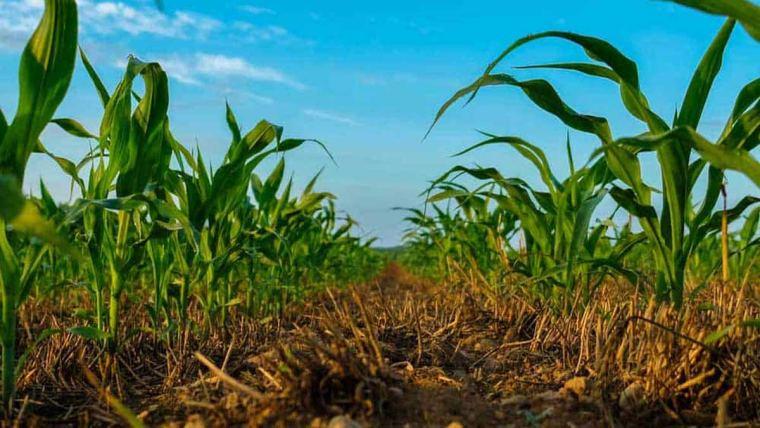 Regenerative agriculture photo