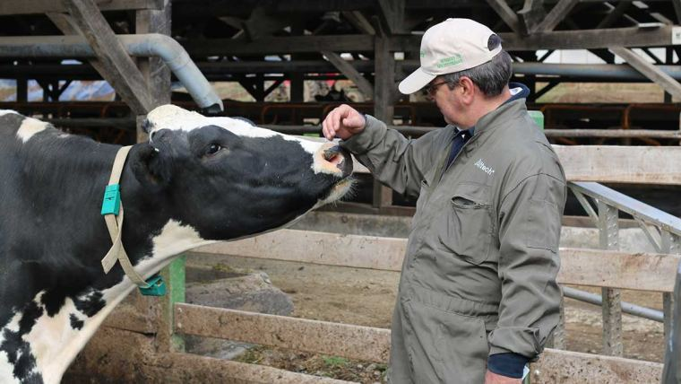 Dairy Cow and Dairy Farmer