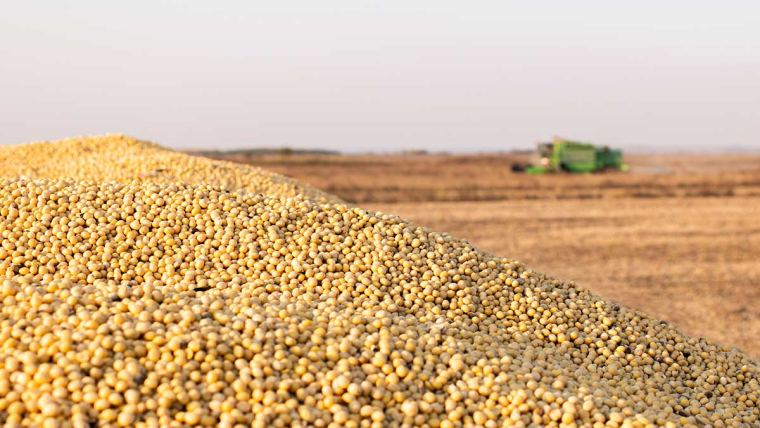 Colheita de soja