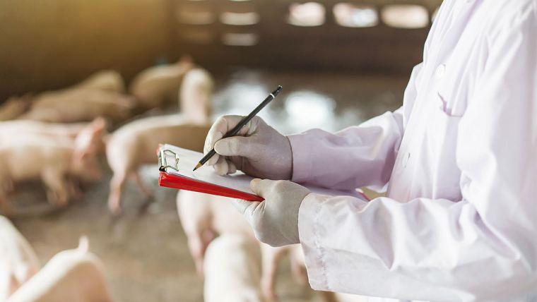 Homem fazendo anotações em granja de suínos