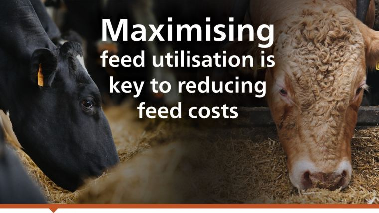Undigested feed means wasted performance