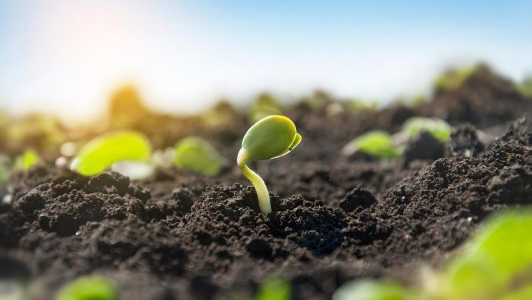 Saiba como melhorar a qualidade do solo