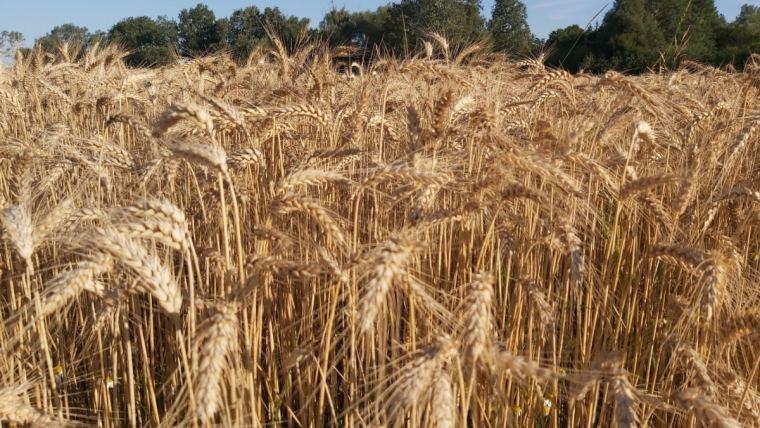 Alltechs europæiske sommerhøstundersøgelse