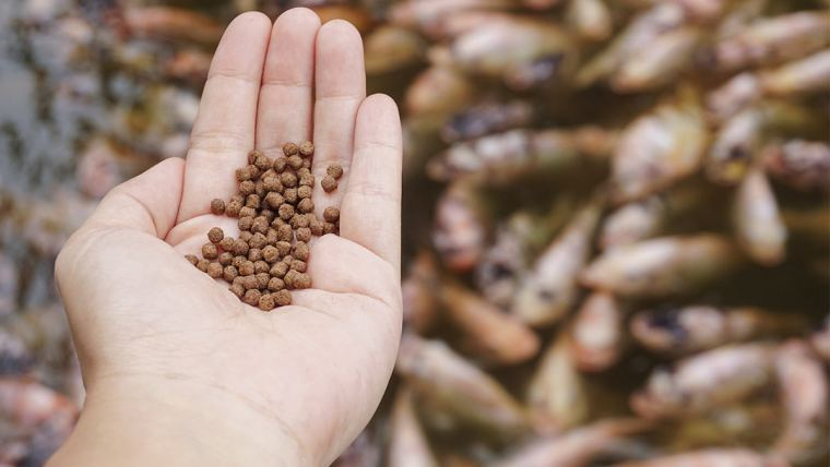 Aquicultura: uso de enzimas na dieta dos animais proporciona maior rentabilidade.