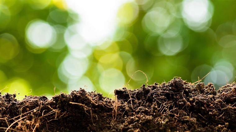 Conheça o efeito priming da matéria orgânica do solo e como ele pode ajudar no melhor desenvolvimento dos cultivos