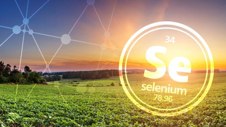 Selenium in agriculture crops