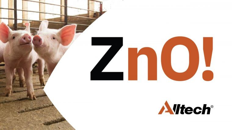 Piglets and ZnO! text
