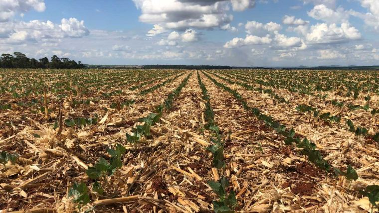 Atenção aos aspectos biológicos permite renovação do solo e melhoria na produtividade