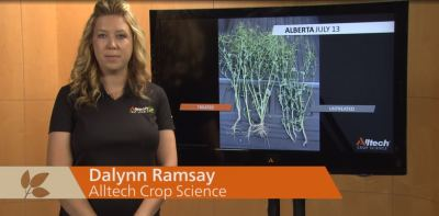 Success Stories with Alltech Crop Science