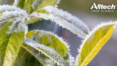 Don't let frost bite your crops this winter