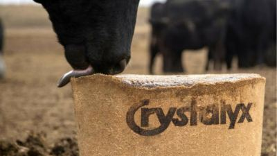 Fresh start: Success on the cattle farm