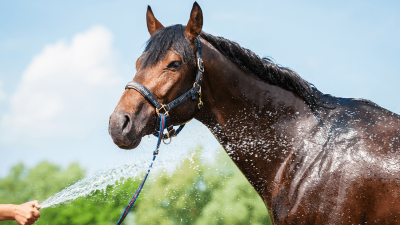 Horse getting sprayed with water