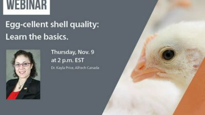 Egg-cellent shell quality: Learn the basics