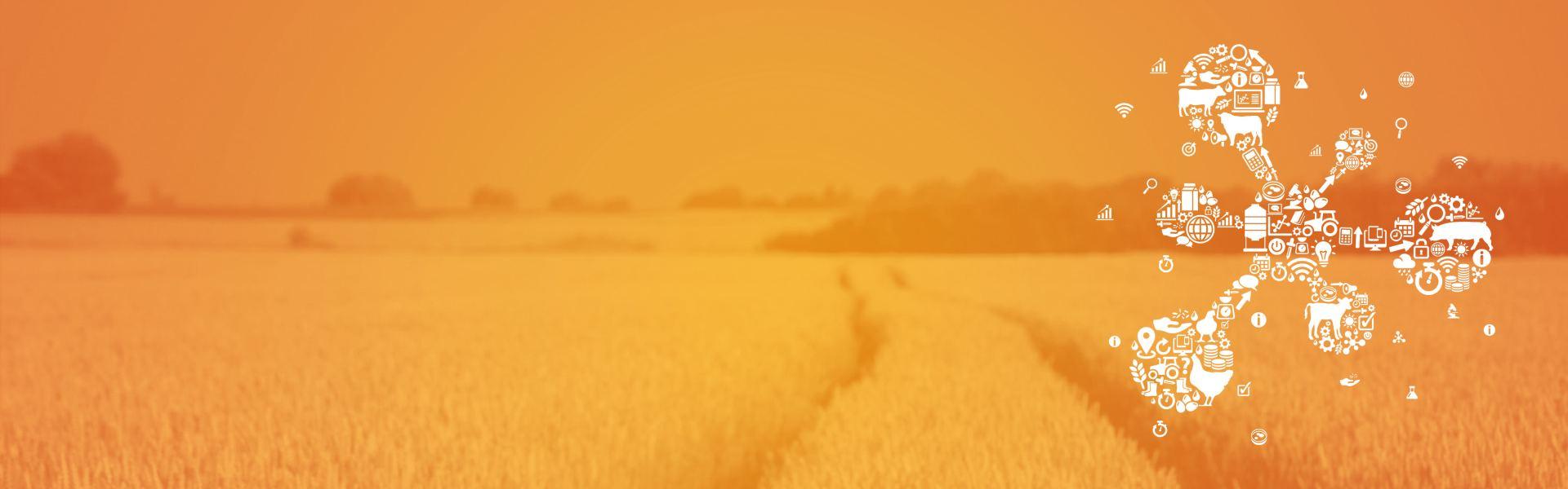 sommerhøstkampagne mykotoksiner alltech denmark 2020