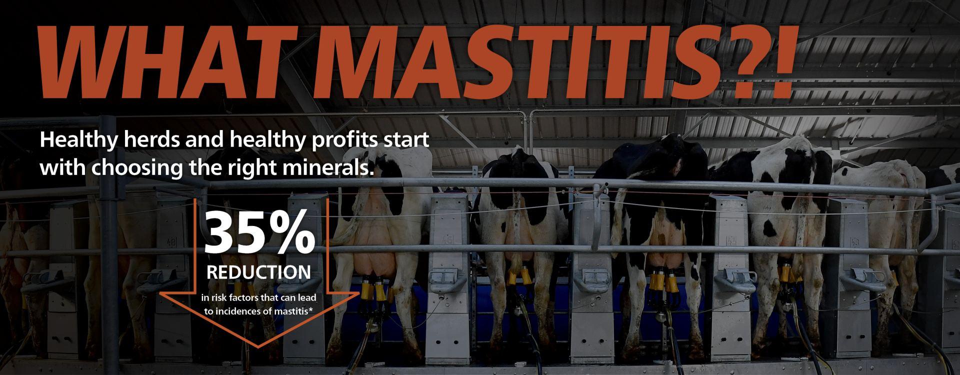 Mastitis campaign