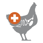 rectify poultry gut health icon