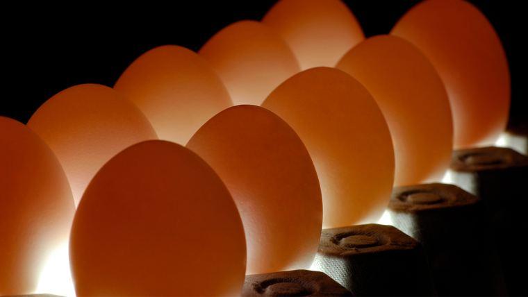Uso de minerais orgânicos aumenta produção de ovos de qualidade acima da média nacional