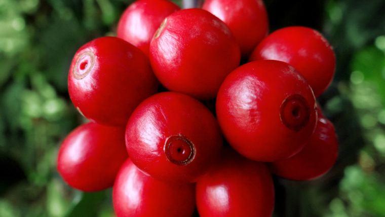 Café especial: saiba como atingir qualidade diferenciada para grãos destinados à bebida