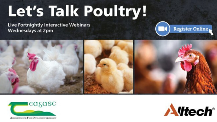 'Let's Talk Poultry' – Teagasc and Alltech launch webinar series to tackle poultry industry issues