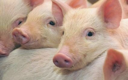 Program smanjenja upotrebe antibiotika