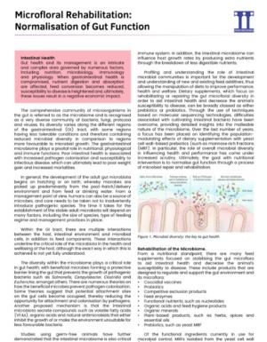 Microflora rehabilitation: Normalisation of Gut Function - Research PDF thumbnail